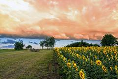 Etonnant nuage au soleil couchant (Croc'odile67) Tags: nikon d3300 sigma contemporary 18200dcoshsmc paysage landscape nature nuages cloud ciel sky coucherdesoleil