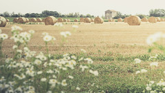 ... (Stefano Montagner - The life around me) Tags: olympuscamera olympusomd stefanomontagner venezia venice agriculture bale ruralscene field nature hay farm summer harvesting outdoors crop landscape meadow yellow landscaped straw nonurbanscene wheat season growth thelifearoundme