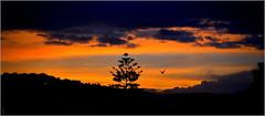 bonsoir soleil, bonjour la nuit ! (Save planet Earth !) Tags: nice france nikon sunset oiseau goéland amcc ciel sky nuage