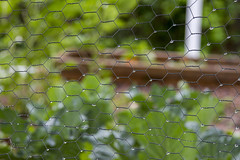 droplets on garden fence (Karen Juliano) Tags: fence garden rain water droplets chickenwire vegetable leaves