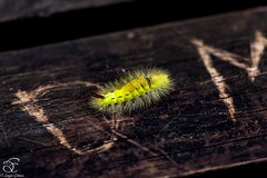 Miracle (BeNowMeHere) Tags: ifttt 500px autumn color nature macro bokeh closeup butterfly animal wood insect little wildlife caterpillar colorful outdoors wing colourful moth pest invertebrate worm larva desktop no person fall animals colour turkey bolu lepidoptera miracle yedigöller benowmehere isntit