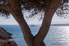 #islote #islot #árbol #tree #2016 #bolnuevo #mazarrón #murcia #españa #spain #mar #sea #mediterráneo #naturaleza #nature #paisaje #landscape #turismoespaña #turismospain #photography #photographer #picoftheday #sonystas #sonyimages #sonyalpha #sonyalpha35 (Manuela Aguadero) Tags: landscape mar turismospain españa mazarrón sonystas 2016 sonya350 sonyimages nature spain bolnuevo picoftheday sea turismoespaña islot photography murcia mediterráneo sonyalpha sonyalpha350 islote paisaje tree photographer alpha350 árbol naturaleza