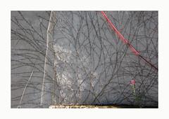 Portée (hélène chantemerle) Tags: mur végétation fils tuyau fleur lumière rouge blanc wall wire pipe flower light red white