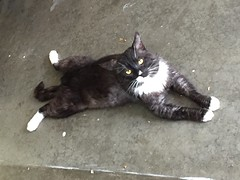Rufus - 3 year old neutered male