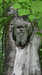 Green Man carving by trackbed, Bollington    (Marple - Macclesfield  old railway) (dave_attrill) Tags: bollington marpletomacclesfield greenman wood carving macclesfield disused railway line trackbed path mslr cheshire rose hill cycle beeching report cuts closed 1970 opened 1869 june 2017