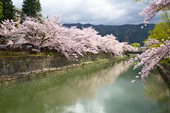 Sparkles of Spring (johnshlau) Tags: sparklesofspring heianshrine peacefulness tranquility calmness peace sparkles river 平安神宫 riverbanks weepingcherrytrees cherry trees blossoms fullbloom temple bridge cherryblossoms kyoto japan flowers flora nature pink reflections water spring springtime 京都 さくら 桜