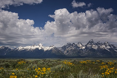 bring it on home to me... (J. Kaphan Studios) Tags: grandtetonnationalpark grandtetons nationalparks nationalparkphotography landscape landscapephotography jacksonhole wyoming clouds cloudporn flowers balsam snow mountains bigmountains postcard