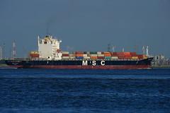 MSC Alyssa DST_1356 (larry_antwerp) Tags: mediterraneanshipping msc container schip ship vessel 船 船舶 אונייה जलयान 선박 کشتی سفينة schelde 斯海尔德河 スヘルデ川 스헬더 강 رود شلده سخيلده rilland nederland netherlands zeeland 9235050