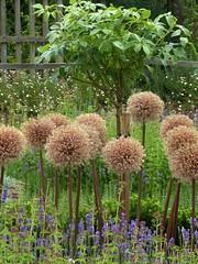 Shakespeare's New Place Garden (jacquemart) Tags: newhouse garden shakespeare shakespearebirthplacetrust knotgarden renaissance warwickshire stratforduponavon newplace