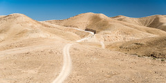 Wilderness-1126 (toniertl) Tags: day3 israel2017 wadikelt jerichoroad sands toniphotoxoncouk wilderness wadielquelt desert barren rugged animaltracks oasis thirsty heat lonely empty lost peace peaceful solitute quiet