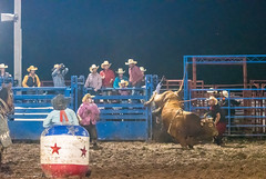 DSC_4499-Edit (alan.forshee) Tags: rodeo horse cow ride fall buck spin twirl bull stallion boy girl barrel rope lariat mud dirt hat sombrero