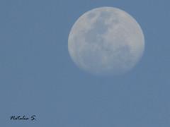 IMG_0550 (Natalia Sosa M.) Tags: luna moon morning mañanero blue sky venezuela