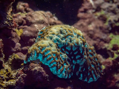 brianleungphotography-72 (brianleung5895) Tags: tortoise fish reef seaworld sea diving ilovetravel photoofday photooftheday photographer travel travelphotography wonderful wonderfulworld moalboal cebu philippines momentwithbrian epl3 olympus hkig