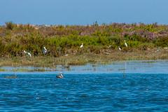 Algarve 2013 (110) (ludo.depotter) Tags: 2013 algarve boot kust olhao riaformosa