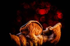 Underworld (ursulamller900) Tags: tessar2850 extensiontube 12mm makroringe macro macromondays bokeh mushroom bottomsup
