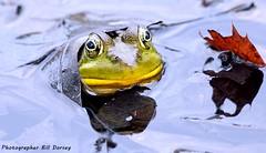 Leaf Hoodie (NiteOwl>) Tags: 攝影發燒友 frog