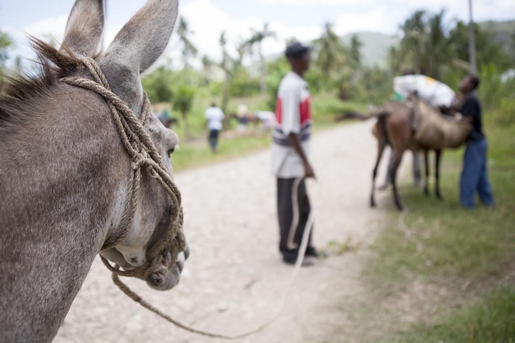 AVSF-HAITI-2017-TRISTANPARRY202