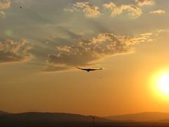 Alvaro_Storks 11 (dirkweichgrebe) Tags: storch orange sonne sonneuntergang vogelflug
