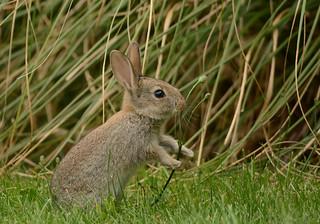 Rabbit kit :)