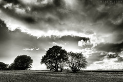 bnw landscape (Neal J.Wilson) Tags: trees bnw blackandwhite landscapes moods stormclouds clouds skies silhouette weather denmark danish nordic scandinavia nature