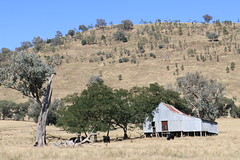 Farm Shed - (New South Wales) (IDH Mackinnon) Tags: hume lake dam new south wales australia australian aussie id hearn mackinnon photographer 2016 rural farm country property agricultural agriculture infrastructure shed barn sheep shearing albury cows cattle