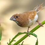 A Curious Birdie thumbnail