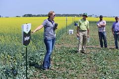 bayer-showcase-nd-17-148 (AgWired) Tags: bayer cropscience showcase plot tour 2017 soybeans canola wheat cereals corn north dakota agwired zimmcomm new media chuck zimmerman