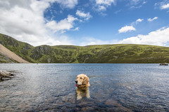 (Chris B70D) Tags: loch brandy scotland highlands east coast midlands glen clova hotel hill mountain walk hike climb view scenery panoramic vista picturesque landscape hills reflections water lake rock clouds blue sky summer wide angle canon 70d tokina 1116 ziggy golden retriever dog goldy pup bandanna happy cute chris berridge photography