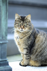 Cimetière Montmartre 11 03 2017_01 (Partibul) Tags: paris partibul cimetière montmartre chat