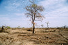 Cleared land (CIFOR) Tags: africa dry ouagadougou forestpolicy landuse environmentalimpact nebbou carbon cifor dryforests degradation stocks capacity landdegradation dryland burkinafaso tree forestresearch systematicreview emissions deforestation casestudies horizontal climatechange branches