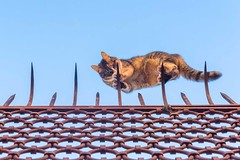 Curiosity Killed the Cat (Nick Koehler Photography) Tags: rome venice florence travel travelphotography streetphotography street explore adventure siena photography passion people landscape cityscape city citylife