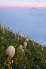 Horizon (Laura Jacobsen) Tags: alpinelakeswilderness bandera banderamountain hiking i90 iraspringtrail littlebandera mountains sunset trails washington wildflowers
