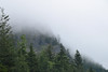 Misty Pass (Carolyn H. - Travel & Nature Photographer) Tags: cascademountains cascades pass mountains washington forested forest trees misty cloudy hill landscape outdoors outdoor nature nikon d5500