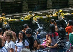 Worshipers taking a bath in the purifying pool at Tirta Empul temple, Bali island, Tampaksiring, Indonesia (Eric Lafforgue) Tags: adults amritha asia attraction bali bali1861 balinese bathing day groupofpeople hindu hinduism holyspringwater horizontal indonesia indonesian men offerings outdoors pond pool purification purifying religion religious religiousbuilding religiouspractice ritual ritualbath sacred tampaksiring tirta tirtaempul tourism warmadewadynasty water watertemple women worship worshipers baliisland