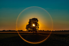 Tree of life (Notkalvin) Tags: canada tree notkalvin sunset sun intothesun mikekline notkalvinphotography flare ring evening outdoor nature