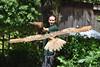 Turkemanian Eagle Owl (Bri_J) Tags: bubobuboturcomanus tropicalbutterflyhouse northanston southyorkshire uk nikon d7200 yorkshire turkemanianeagleowl eagleowl birdofprey bird