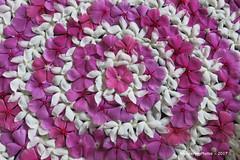 Flower petal Decoration - Tanjore Tamil Nadu India (WanderingPJB) Tags: pinkpurple india tamilnadu tanjore flower petal decoration kerala 7dwf colourfulworld smileonsaturday thinkpink