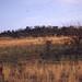 Tsessebe. Pilanesberg