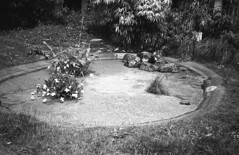 Unrocked (Arne Kuilman) Tags: kentmere400 iso400 chinon 3001 pointandshoot film amsterdam d76 exhausted homedeveloped nederland netherlands blackandwhite kroos pond duckweed vijver