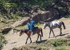 Semonkong (Hans van der Boom) Tags: holiday vacation southafrica lesotho zuidafrika semonkong maseru animal horse people lso
