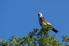 IMG_5186 (DavidMC92) Tags: canon eos 7d tamron sp 70300mm will rogers park oklahoma city mississippi kite