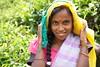 Sri Lanka, tea pickers (2) (walterkolkma) Tags: srilanka tea pickers teapickers centralhighlands nuwaraeliya strathdon teaestates women laborers tamils sonya6300