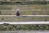 DSC_3770 (Francesco Piscini) Tags: indonesia monkey forest scimmia shy timida carote carrots bali viaggi travel explore