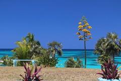 Eleuthera (Ali Bentley) Tags: eleuthera eleutheraisland thebahamas bahamas island caribbean centuryplant canon