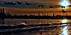 Soft Light--explore (beachpeepsrus) Tags: beach birds beachfront bay longbeachcalifornia longbeachgranprix clouds wave