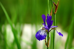 *** (pszcz9) Tags: przyroda nature natura kwiat flower zbliżenie closeup bokeh ogródbotaniczny botanicgarden beautifulearth a77 sony