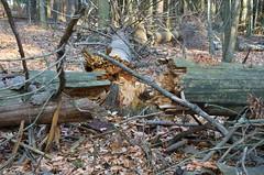 Ojcowski National Park 696. Wood at decay stage. (Hejma (+/- 5400 faves and 1,7 milion views)) Tags: ojcowski national park trees wood decay stage atumn leaves