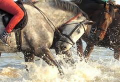 Horses on Frinton Beach (debra.hall88) Tags: horses beach frintononsea essex