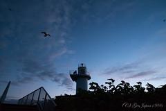 天売島 ウトウの帰巣 (GenJapan1986) Tags: 2017 ウトウ 北海道 天売島 旅行 空 羽幌町 野鳥 離島 日本 fujifilmx70 animal bird teuriisland island travel hokkaido sky 灯台