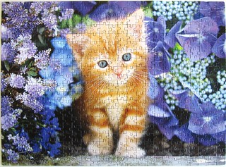 Ginger Cat in Flowers (Greg Cuddiford)